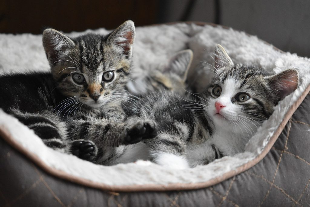 Kleine Katzen stubenrein